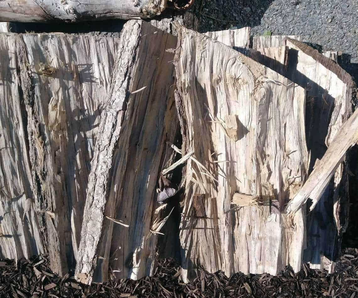 sweet gum firewood