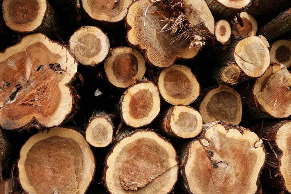 Best Smelling Firewood