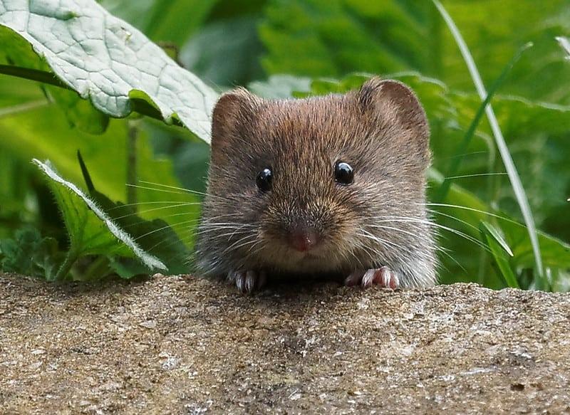Will Mice Come Near Me While I Sleep