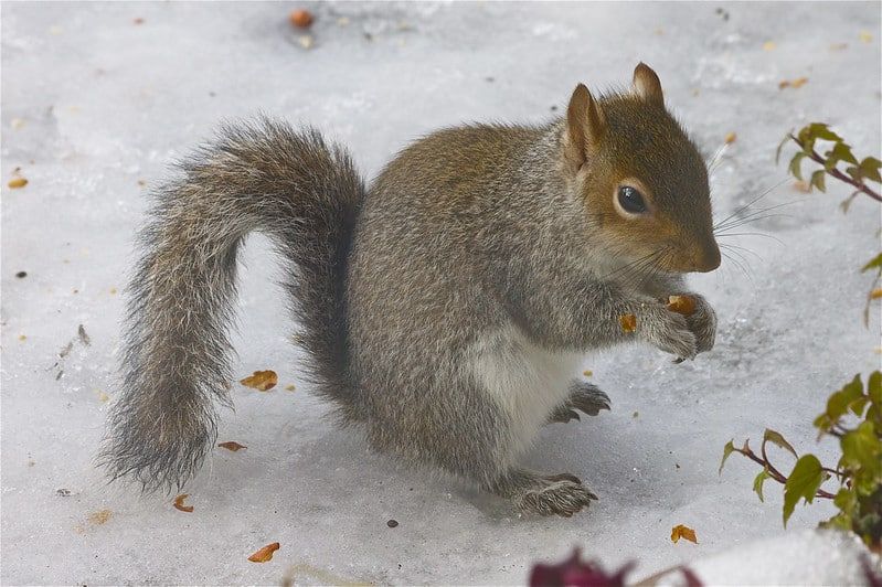 How Do Squirrels Survive The Winter