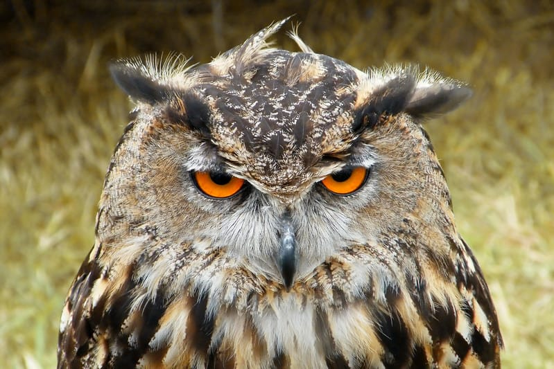 Where Do Owls Sleep: Complete Guide