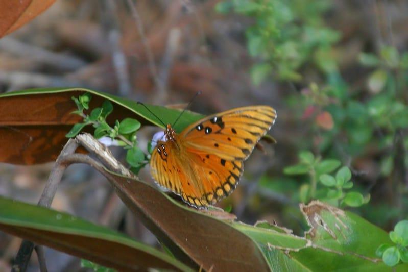 What Eats Butterflies