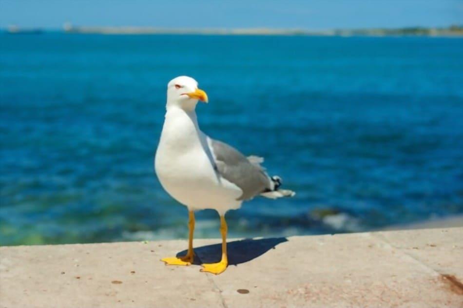 https://www.shutterstock.com/image-photo/seagull-running-on-shore-close-view-668143492