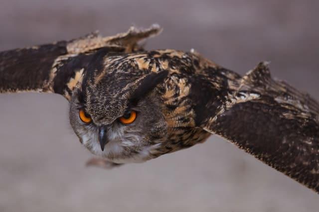 Do Owls Eat Snakes