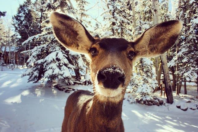 Why Do Deer Freeze In Headlights